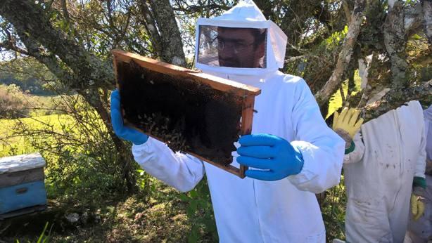 Doze toneladas de mel foram produzidas no ano passado no município