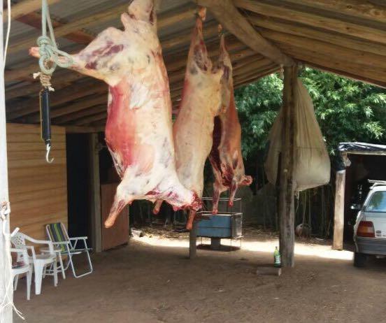 Ovinos estavam prontos para venda em Pinheiro Machado