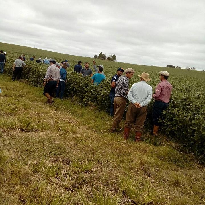 Produtores conferiram as plantações