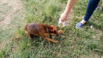 Animais receberam ração e remédios anti-pulgas
