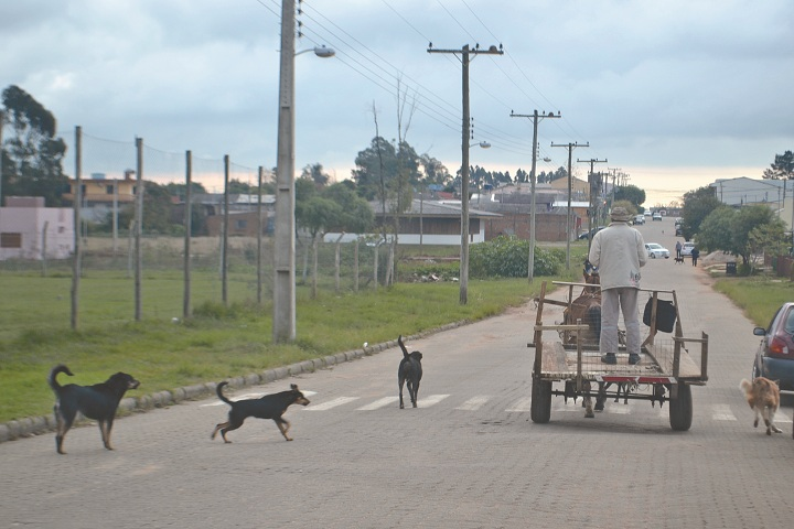 Atualmente, há centenas de animais soltos pelas ruas de Candiota