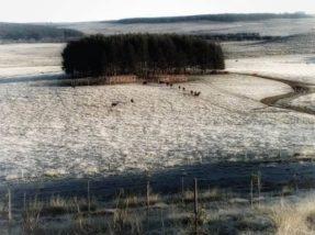 Há exatamente um ano, o registro feito na Estância Guarda Velha,  onde é produzido o Azeite Batalha, marcava o início do inverno