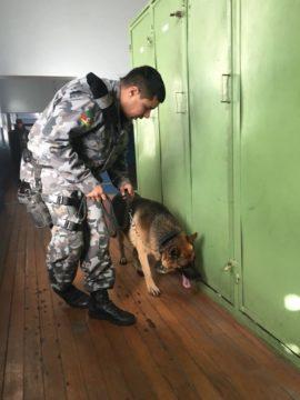 Cão percorreu os alojamentos dos soldados