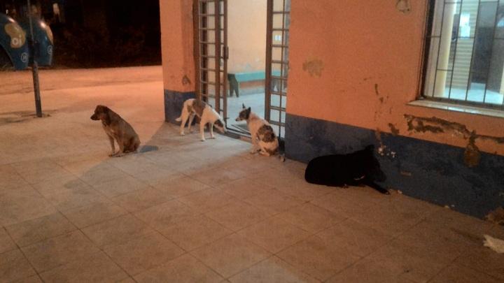 """Rodoviária virou """"alojamento"""" de animais soltos. Situação dos cães também está descrita no projeto enviado pelo Executivo"""