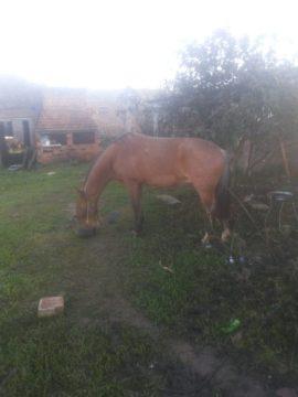 Criação de cavalos no pátio das residências é bastante comum em Hulha Negra. Cardoso diz se sentir lesado, visto cuidar do animal e do local onde o cavalo é criado