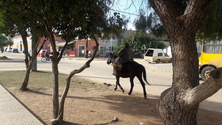 Trânsito de animais na avenida principal da cidade é um dos pontos de discussão do projeto